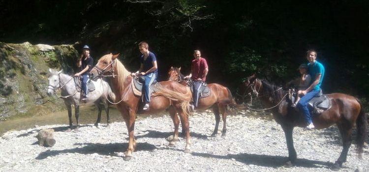 Конные прогулки в Тюменском
